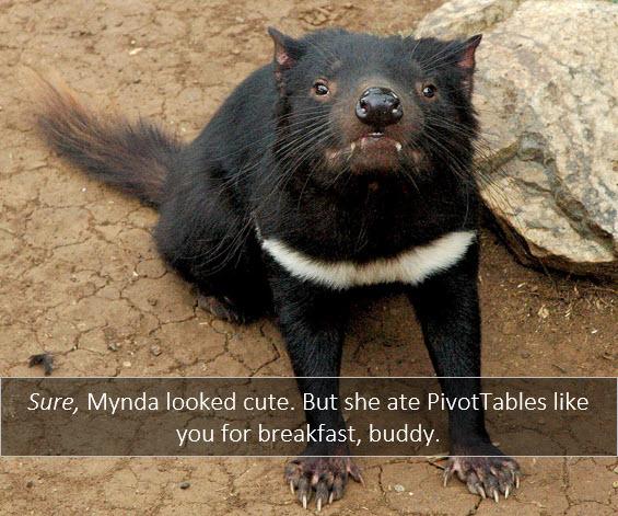 13. Mynda